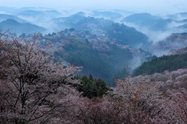 日本一の林業地「吉野で自伐林業家を目指しませんか?」地域おこし協力隊を募集中(※締めきりました!)