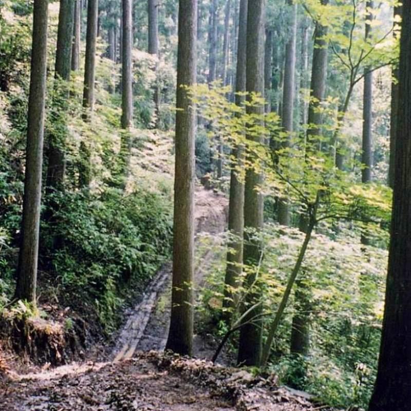 株式会社良品計画が主催する自伐型林業シンポジウムが千葉県大多喜町で開催!