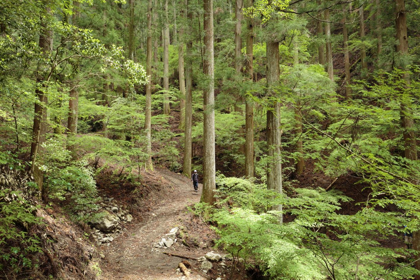 6月19日に自伐型林業フォーラムを開催します。