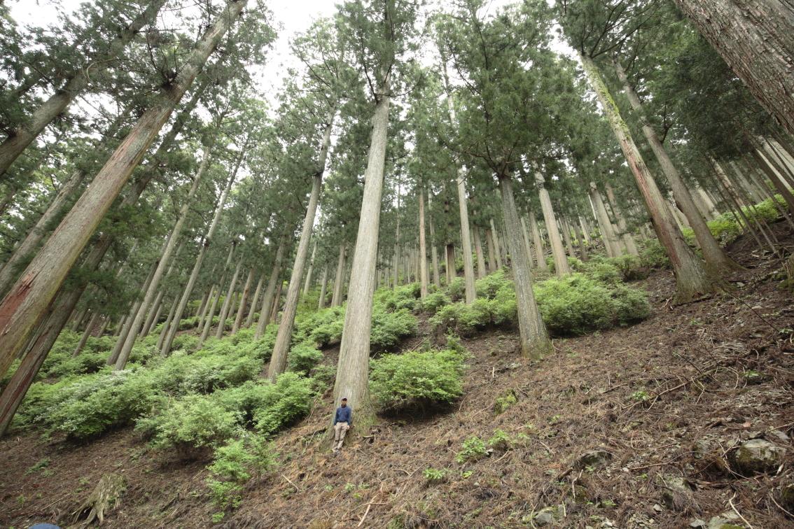 6月21日に自伐型林業推進協会総会イベントをネット開催します。