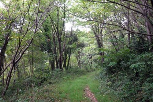 山口県長門市で、山で生活できる自伐型林業家を目指す地域おこし協力隊員を募集!